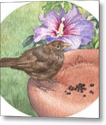 Young Blackbird After Raisins Metal Print