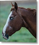 Young Blind Horse In The Rain Metal Print
