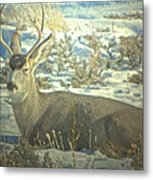 Young Buck Resting Metal Print