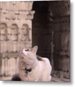Young Cat Old Monument Metal Print