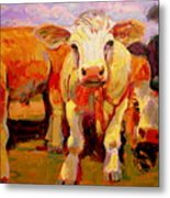 Young Cow Metal Print
