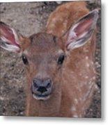 Young Elk Fawn Metal Print