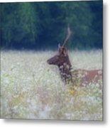 Young Elk In The Smokies. Metal Print