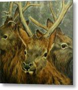 Young Elk Trio- Wapiti Metal Print
