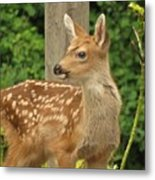 Young Fawn Metal Print