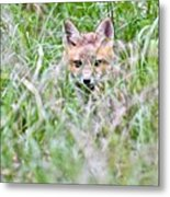 Young Fox Kit Hiding In Tall Grass Metal Print