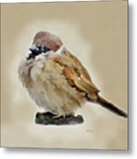 Young House Sparrow Metal Print