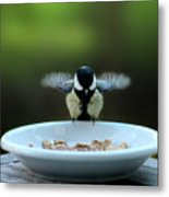 Young Hungry Tit Metal Print