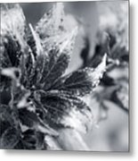 Young Leaves In Black And White Metal Print