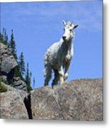 Young Mountain Goat Metal Print