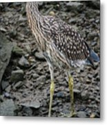 Young Night Heron Metal Print