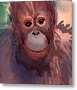 Young Orangutan Metal Print