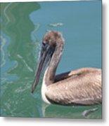 Young Pelican Metal Print