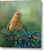 Young Robin On Pine Tree Metal Print