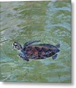 Young Sea Turtle Metal Print