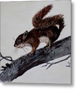 Young Squirrel Metal Print