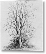 Young Tree Metal Print by Rachel Christine Nowicki