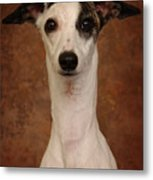 Young Whippet Metal Print