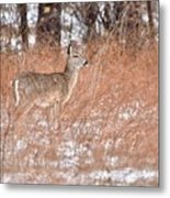 Young White-tailed Deer In The Snow Metal Print