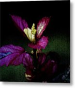 Your Coat Of Many Colors Metal Print