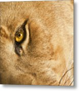 Your Lion Eye Metal Print by Carolyn Marshall