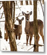 Your Looking At Me Metal Print