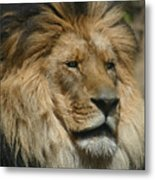 Your Majesty Metal Print