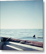 You're Gonna Need A Bigger Boat Metal Print