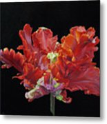 Youtube Video - Red Parrot Tulip Metal Print