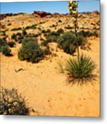 Yucca And Desert Primrose In The Valley Of Fire Metal Print