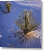 Yucca In Gypsum Sand Metal Print