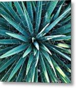 Yucca Plant Detail Metal Print