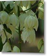 Yucca Plant Metal Print