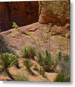 Yucca Plants Valley Of Fire Metal Print