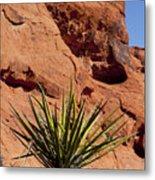 Yucca Three Metal Print