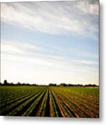 Yuma Fields  Metal Print