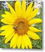 Yummy Sunflower Metal Print