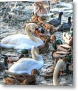 Yury Bashkin Ducks Stockholm  Metal Print