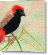 Zanzibar Red Bishop Metal Print