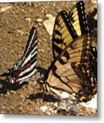 Zebra And Tigers Metal Print