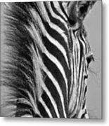 Zebra Baby Metal Print