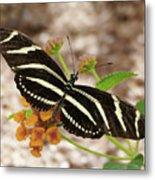 Zebra Butterfly Metal Print