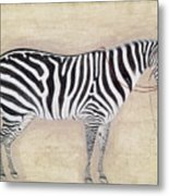 Zebra, C1620 Metal Print