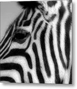 Zebra II Metal Print