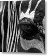 Zebra In Black And White Metal Print