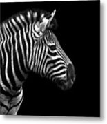 Zebra In Black And White Metal Print by Malcolm MacGregor
