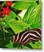 Zebra Longwing Butterfly In Living Desert Zoo And Gardens In Palm Desert-california  Metal Print