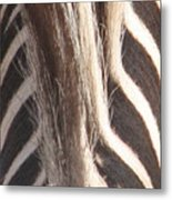 Zebra Mane Metal Print