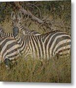 Zebra On The Serengeti Metal Print