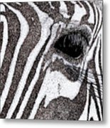 Zebra Portrait Metal Print by Karl Addison